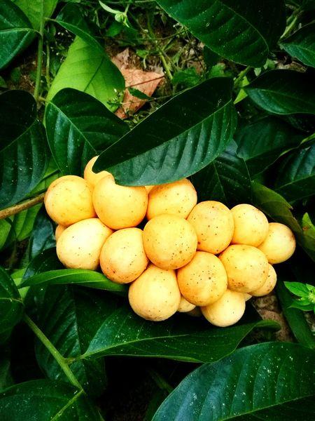 ลองกองHuaweiP9 ผลไม้