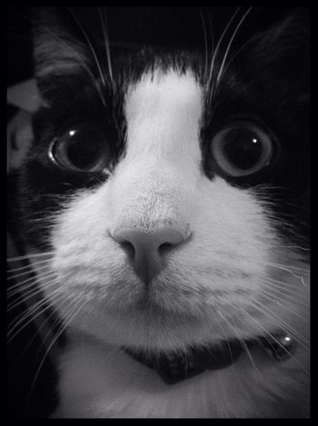 Black And White Cat Club Cats EyeEm Best Shots Cat