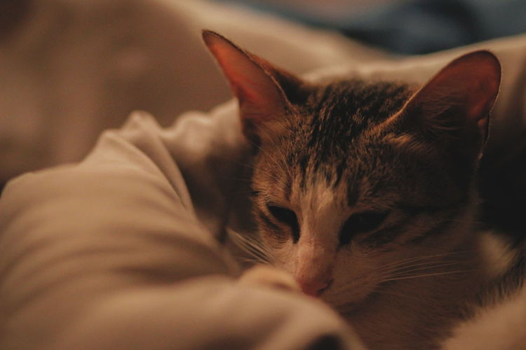 catto Warm Sleep Calm Indoors  Blanket Pets Portrait Feline Domestic Cat Cute Kitten Eyes Closed  Lying Down Close-up Cat Napping Tabby Whisker EyeEmNewHere