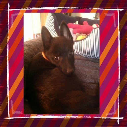 Beautiful Foxy Roxy <3