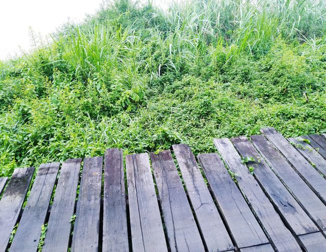 Wooden bridge High Angle View Grass Green Color Green Growing Countryside Greenery Vegetation Flora Young Plant Lush Country House Water Drop Stalk Lakeside Grassland Park Bench Park - Man Made Space Droplet Blooming Pollen Flower Head Leaves Petal Bench A New Perspective On Life