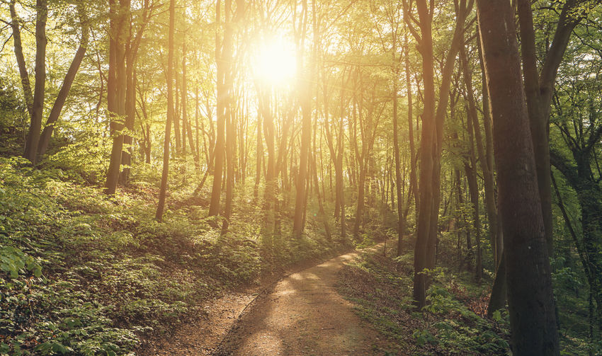 Sun shines on a path in the woods Forest Path Growth Hiking Nature Path Shadows & Lights Sunlight Sunrays Tree Tree Trunk Trees WoodLand Beauty In Nature Environment Protection Explore Forest Pathway Spring Summer Sun Sunbeam Trail Tranquil Scene Travel Destinations Woods