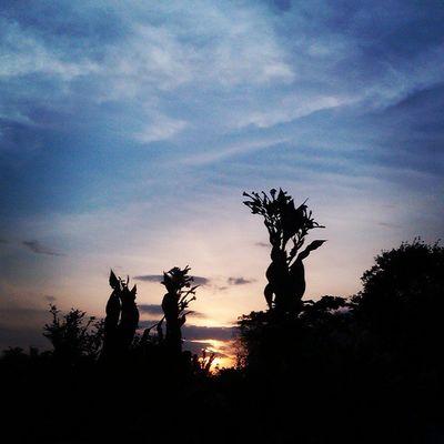 Sunset sore ini 17:30Sawahbokapgw Prambanan Ig_indonesia_ Ig_underground instaanusantaradiyinstanusantaraindonesiagramjalanjalansoreMybest_silhouettemybest_momentmybest_shotIgworldclubigglobalshotig_murciaig_meridanature_greecesunsets_capturesloves_sunsetig_asia_wow_indonesiakameraHpGwKameraHpGw_jogjakartahtcindonesiaindonesiaexplorejogjasunsetoftheday