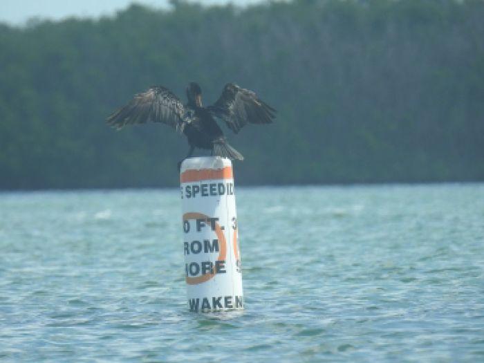 bouy Bird Water