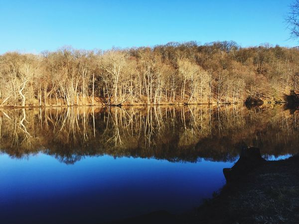 Reflection Nature Tree Beauty In Nature Tranquility Tranquil Scene Scenics Blue Clear Sky No People Water Non-urban Scene Outdoors Idyllic Landscape Sky Standing Water Growth Day Wilderness Area