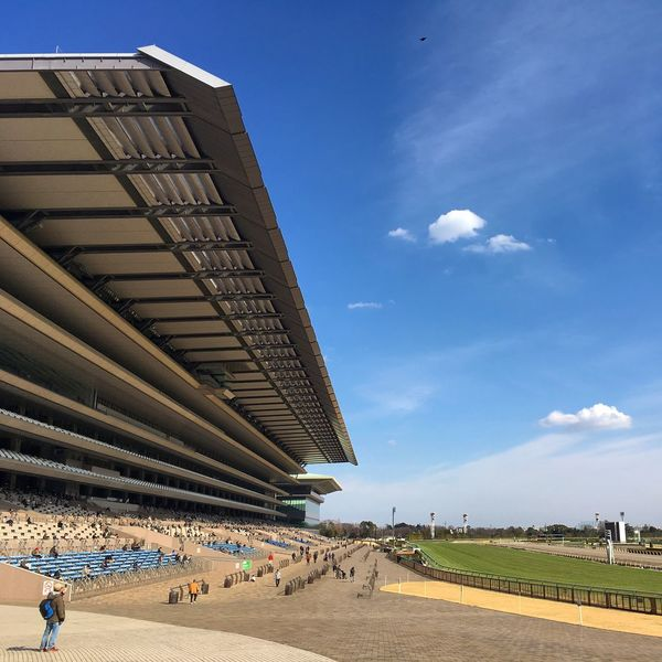 Racecourse horses Architecture Building Exterior Built Structure City Day Horse Japan Large Group Of People Men Outdoors People Racecourse Real People Sky Tokyo
