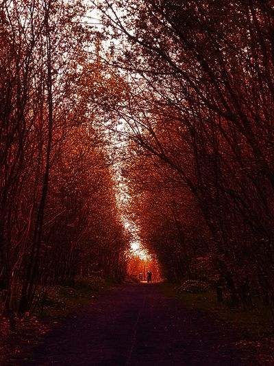 Autumn Tree No People Red Outdoors Nature Beauty In Nature Simple Beauty Beauty In Detail Nature Is Beautiful Backgrounds Scenics Close-up Freshness Blooming Growth Beauty In Nature Beauty In Ordinary Things People Walking  On The Horizon Nature VanishingLandscape Vanishing Point..