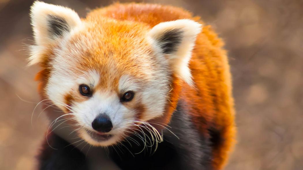 I love animals Animal Animal Themes Animals Cute Nature Wildlife Zoo Zoo Life ZooLife Zoology