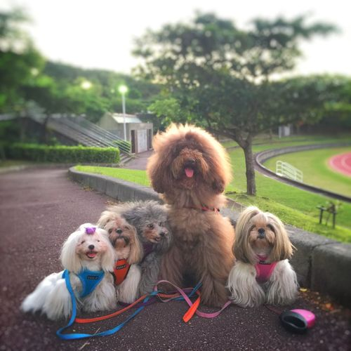 Cute Pets Dog Love DogLove I Love My Dog Happy Dog My Dog Pet Dogs Dog Pets