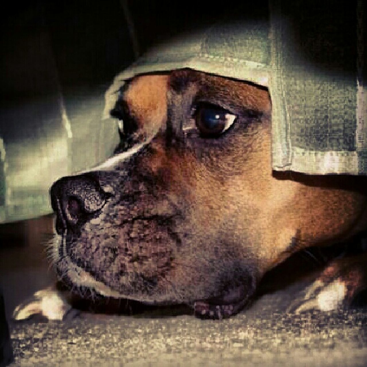 dog, pets, one animal, domestic animals, close-up, animal themes, animal head, no people, indoors, portrait, mammal, day