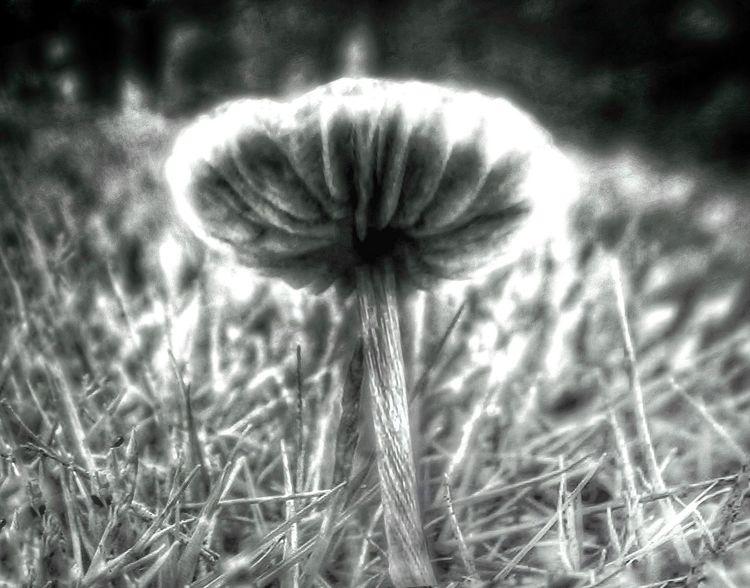 """Night Mushroom"" Bkack and white exposed photography... Darkness IPhoneography ASIA Mushrooms Blackandwhite Light And Shadow Lowlightphotography Dark Glowing Moonlight Grass"