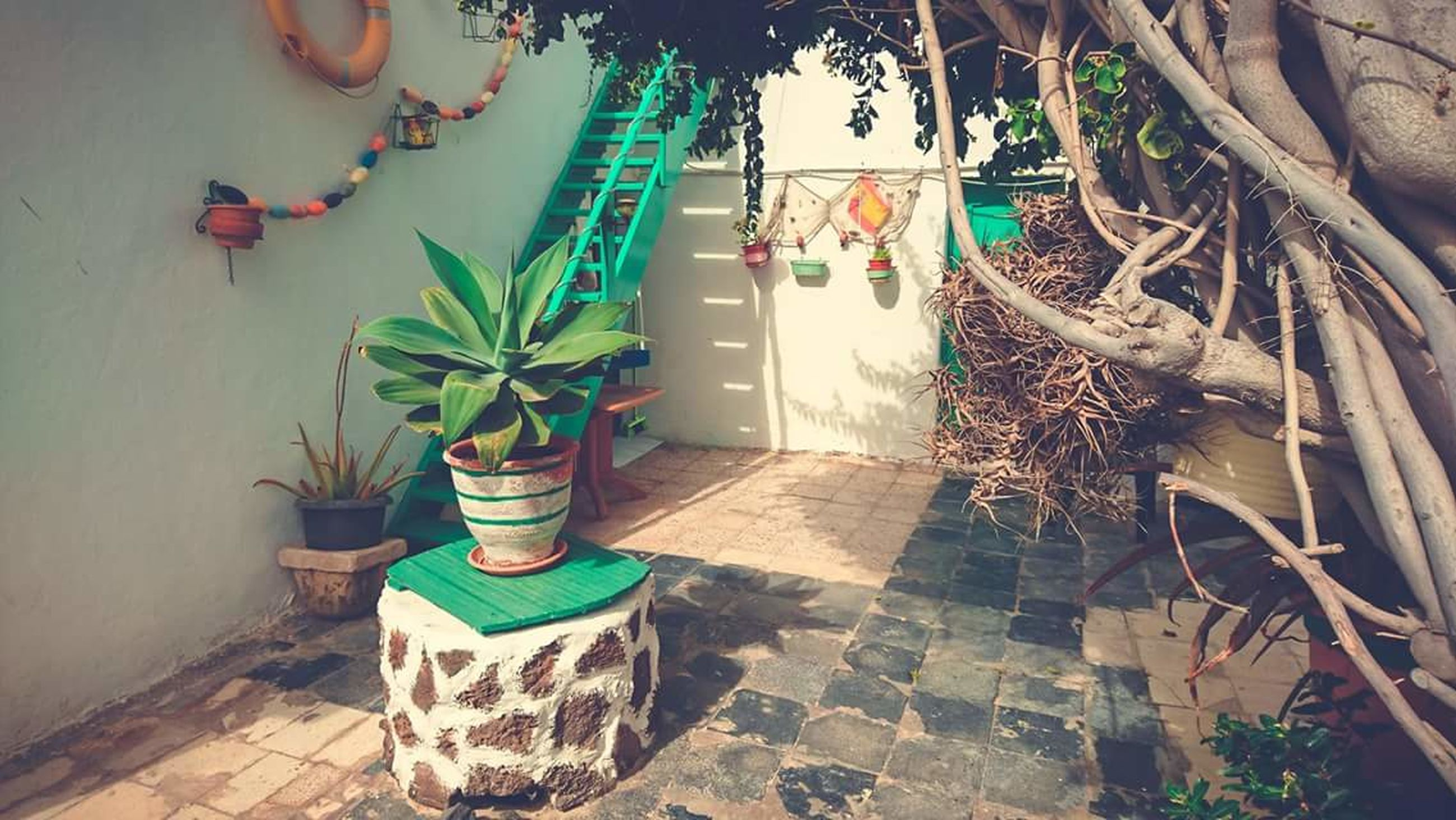 potted plant, built structure, architecture, wall - building feature, plant, building exterior, wall, growth, creativity, art, art and craft, no people, day, text, flower, decoration, house, multi colored, graffiti, outdoors