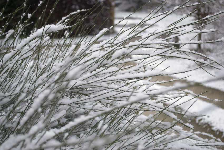 Beauty In Nature Close-up Cold Temperature Day Field Nature No People Outdoors Snow Tranquility Weather Winter