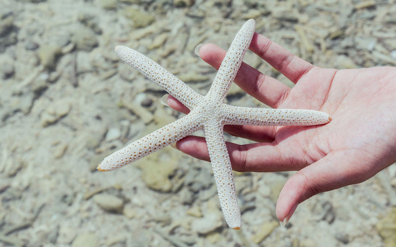 Close-up of cropped hand holding starfish at beach