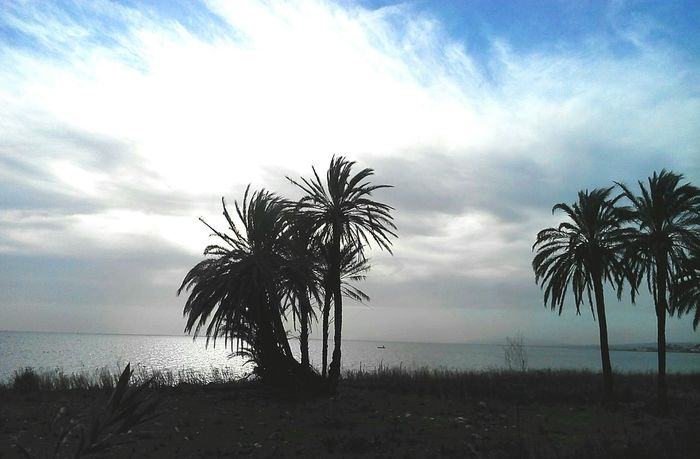Sky Cloud - Sky Sunset Tree Outdoors Palm Tree Horizon Over Water Nature Sea Landscape Water Scenics No People Day