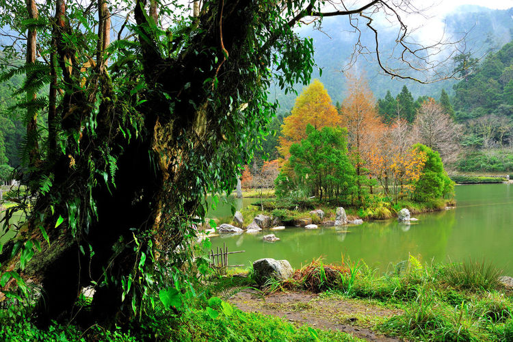 Autumn season, colorful lake view. Autumn Natural Scenery Animal Themes Beauty In Nature Branch Compared Day Fall Forest Grass Green Color Growth Lake Leaf Nature No People Outdoors Peaceful Plant Quiet Forest Scenics Tranquil Scene Tranquility Tree Water