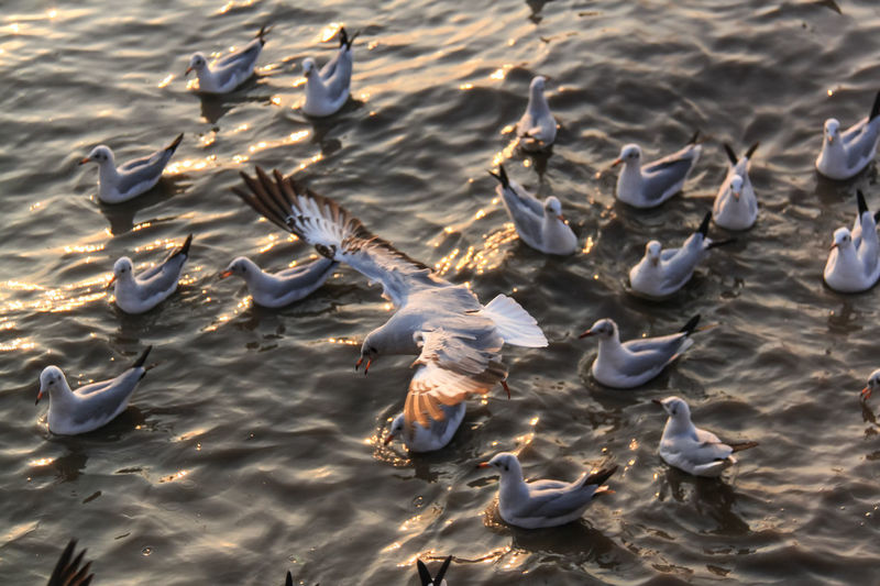 High angle view of seagulls at lake during sunset
