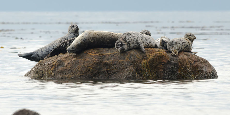 Animal Themes Animals In The Wild Mammal Nature No People Outdoors Relaxation Sea Sea Life Seals Seals Chilling Sleeping Seal Water