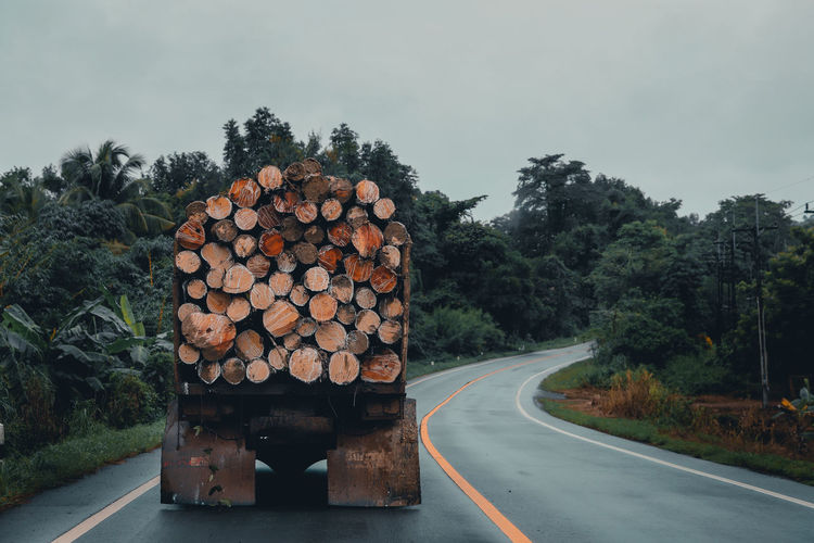 Truck carrying logs of wood on the road
