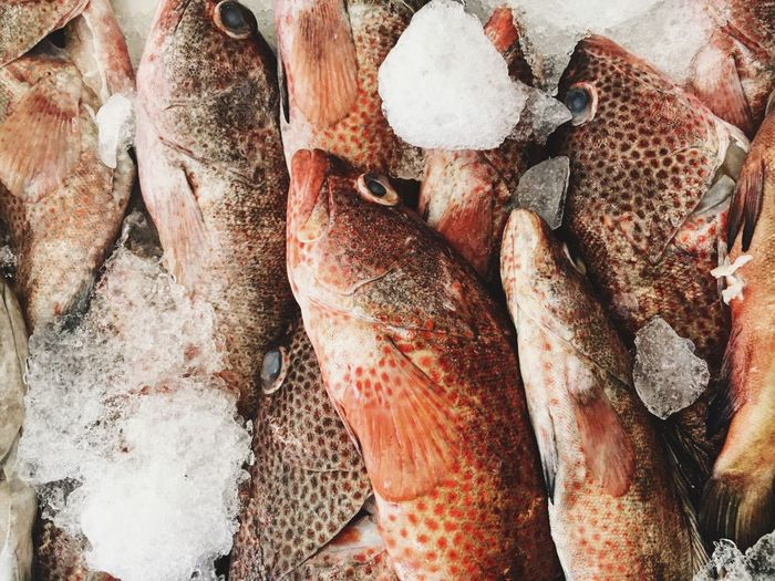 Food And Drink Food Seafood Freshness Healthy Eating Fish Retail  Raw Food Market Close-up Market Stall Full Frame Large Group Of Objects For Sale No People Backgrounds Day Outdoors Red Snapper