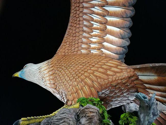 Animal Body Part Extinct Langkawi Island Malaysia Eagle
