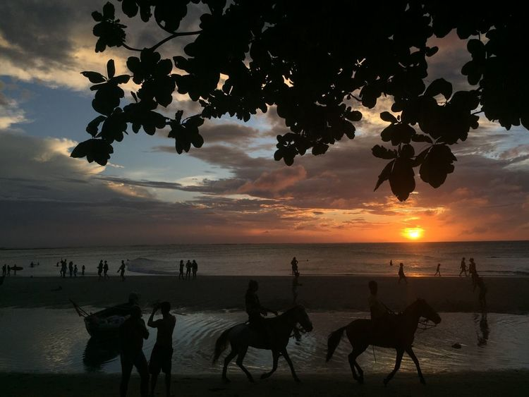 Activity Animal Themes Beach Beauty In Nature Brasil Brazil Clouds Holiday Horizon Over Water Horse Horse Riding Horses Jericoacoara Nature Outdoors People Sea Shore Silhouette Sky Sunset Tree Vacations EyeEmNewHere