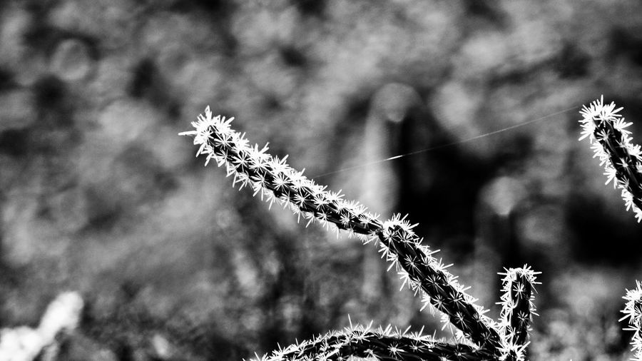 Beauty In Nature Close-up Cold Temperature Day Focus On Foreground Fragility Growth Nature No People Outdoors Plant Tranquility Winter
