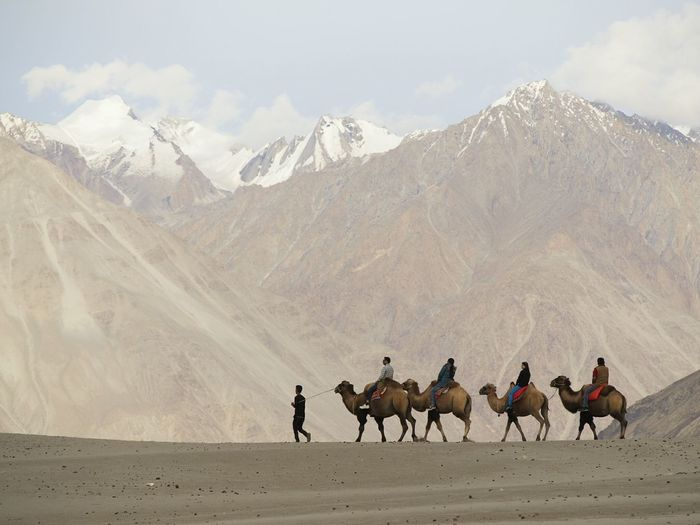 People riding camels against mountains at nubra valley