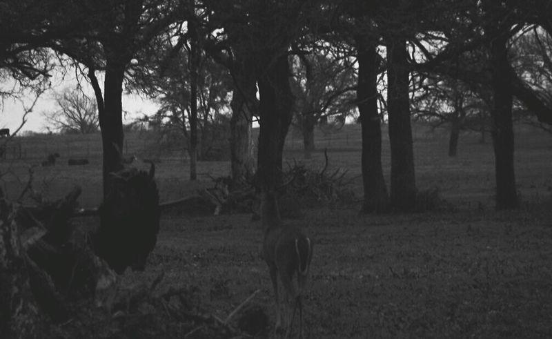 Bnw_friday_eyeemchallenge Whitetail Buck