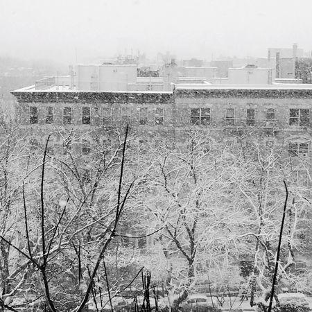 Snow ❄ Winter Cold Hamilton Heights Sugar Hill Jackie Robinson Park New York City Harlem