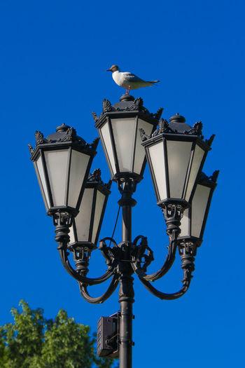EyeEm Selects Bird Perching Clear Sky Blue Street Light City Sky Architecture Weather Vane Seagull Stork Bird Nest