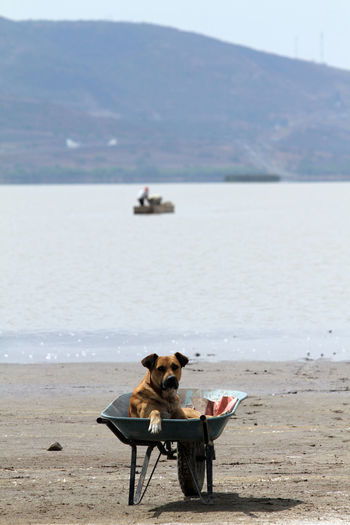 A dog awaits a fisherman on the shore of Lake Cuitzeo Beach Beauty In Nature Cuitzeo Day Full Length Horizon Over Water Mammal Men Mountain Nature One Person Outdoors People Pet Real People Sand Scenics Sea Sitting Sky Tranquility Water