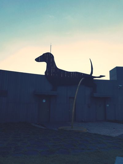 One Animal No People Built Structure Animal Themes Adog Shadowofdog Rooftop Lottedepartmentstore 11F Busan,Korea 秋の始まり 韓国 釜山 犬 陰 釜山日和 ロッテ デパート 何だか切なくて