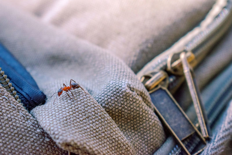 High angle view of ant on backpack