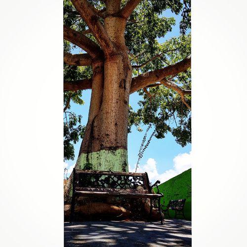 Tree Ancient Civilization Low Section Sky Architecture Close-up Built Structure Historic