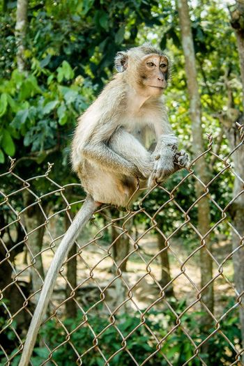 Monkey sitting in a fence