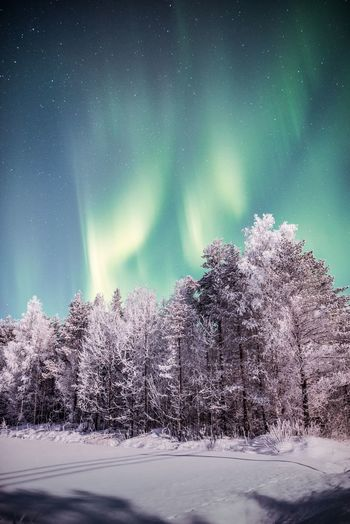 Lights from last night Snow Winter Tree Beauty In Nature Sky Tranquility No People Nature Tranquil Scene Night Green Color Landscape Outdoors Extreme Weather Aurora Borealis Northern Lights Scenics Green Color Lapland Travel Nature_collection Beauty In Nature Freshness Hanging Out Astronomy