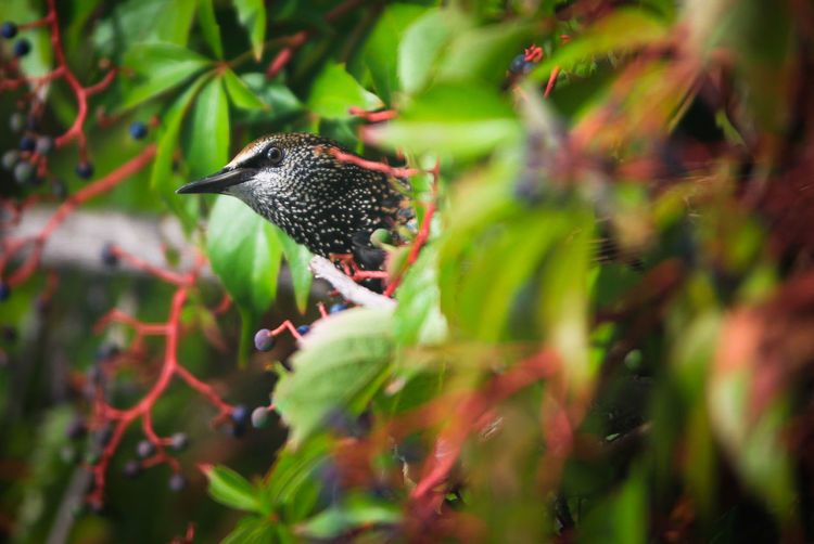 Close-up of a bird perching on plant