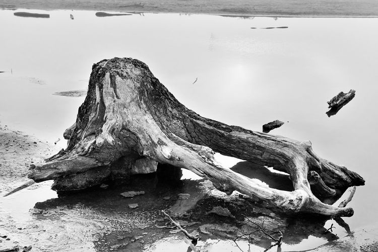 Reflection Animal Themes Animal Wildlife Animals In The Wild Beach Beachlife Bird Blackandwhite Photography Close-up Day Dead Tree Driftwood Lake Low Tide Nature No People One Animal Outdoors Sky Tree Water Wood - Material