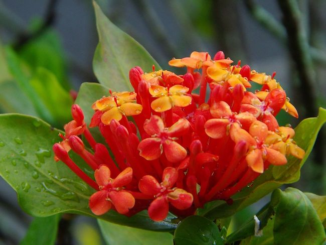 Uma bela flor, com detalhes em zoom Flower Collection Flowers Red Flower Red Flowers Water Rain Flower Plant Nature Flower Head Growth Beauty In Nature Freshness Fragility Red Shades Of Winter