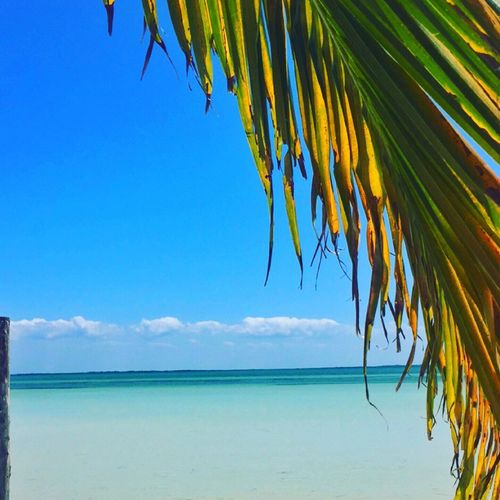 Tranquility Nature Blue Horizon Over Water Beach Palm Tree Holbox The Paradise Holbox Island Mexican Caribbean Tranquil Scene Water Lagom First Eyeem Photo