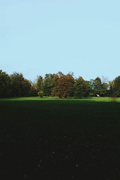 Colors Of Autumn Vscocam Autumn Leaves Landscape_Collection