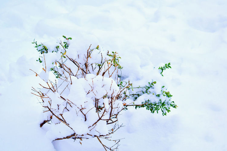 Beauty In Nature Bush Bush Under Snow Close-up Fragility Freshness Nature Outdoors Park Plant Purity Snow Tranquility White Winter Winter Photography Winter Wonderland Winter_collection Wintertime