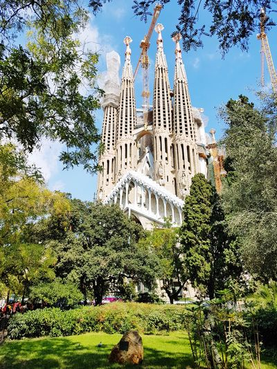 The never ending masterpiece Barcelona, Spain Iconic SPAIN Build Building Chuch Sagrada Familia Tree Built Structure Architecture Plant Building Exterior Sky Nature Low Angle View Day Building No People Outdoors Sunlight Travel Destinations Cloud - Sky History Green Color Travel