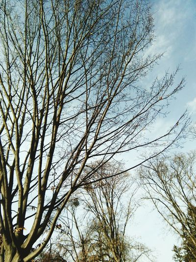 Tree Nature Low Angle View Day No People Beauty In Nature Sky Outdoors Branch Growth Fotography Behappy Photos LovePhotography❤ Nature JustDoIt LoveYourself Beauty In Nature Vacations Love To Take Photos ❤ Lovefotography Autumn2017 Fall Beauty GoodVibesOnly LaraLuna