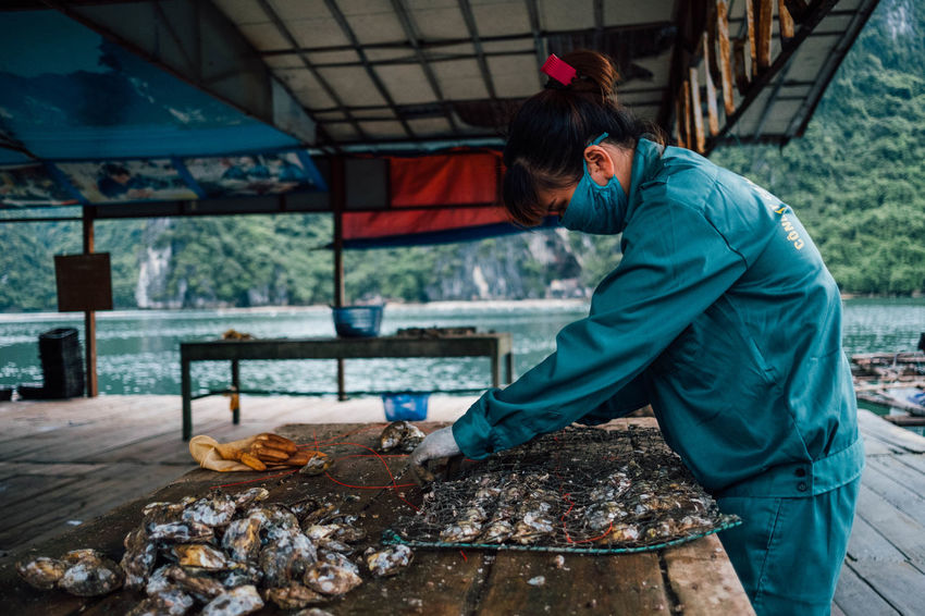 At the oyster farm. Farm Seafood Woman Worker Asian Food Day Food Food And Drink Freshness Full Length Healthy Eating One Person Outdoors Oyster  People Real People Seafood Shell Woman At Work