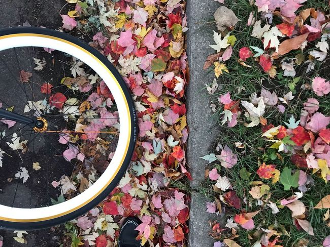 Fall Pedal Vermont Fall Beauty Fall Autumn colors Autumn Travel High Angle View Plant Day Nature