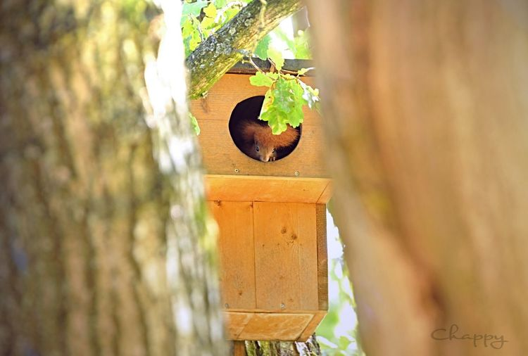 Eichhörnchen Wood - Material Day No People Selective Focus Tree Plant Outdoors Nature Birdhouse Animals In The Wild Animal Wildlife Animal