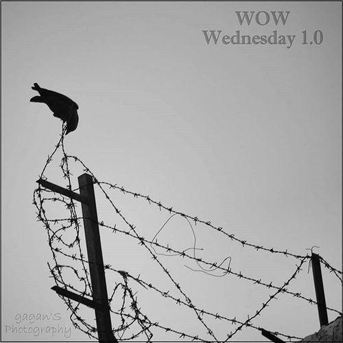 WOW Wednesdays... Give caption and win prizes... Ww1 .0 Gagans_photography WowWednesdays