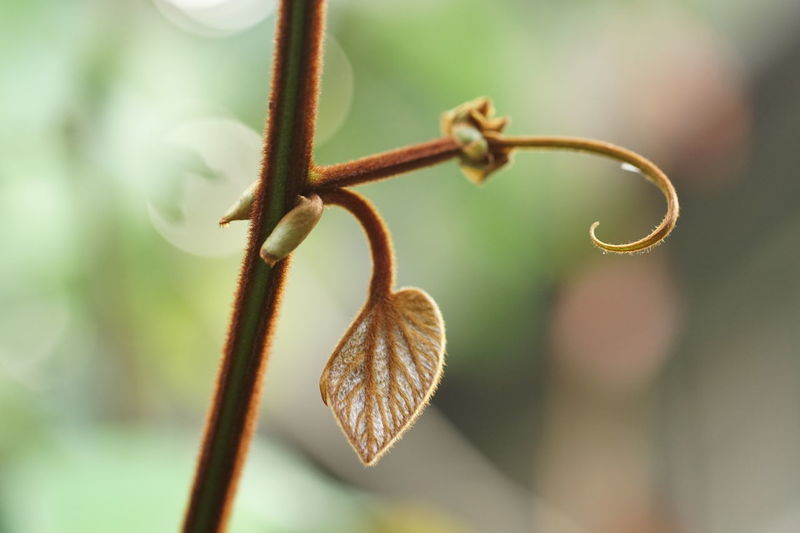 Home grown Vein Veins In Leaves Beauty In Nature Blade Branch Brwon Budding Close-up Curve And Line Focus On Foreground Midrib Nature No People Outdoors Petiole Straight And Curved Veins Of Leaf